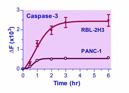 Caspase Assay Kit