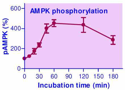AMPK Phosphorylation Assay Kit