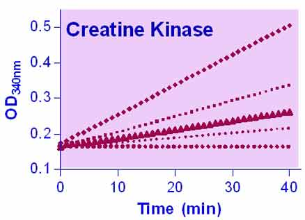 Creatine Kinase Assay Kit