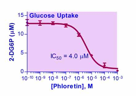 Glucose Uptake Assay Kit