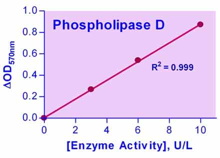 Phospholipase D Assay Kit