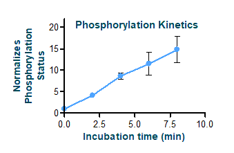 Phosphorylation Kinetics Graph
